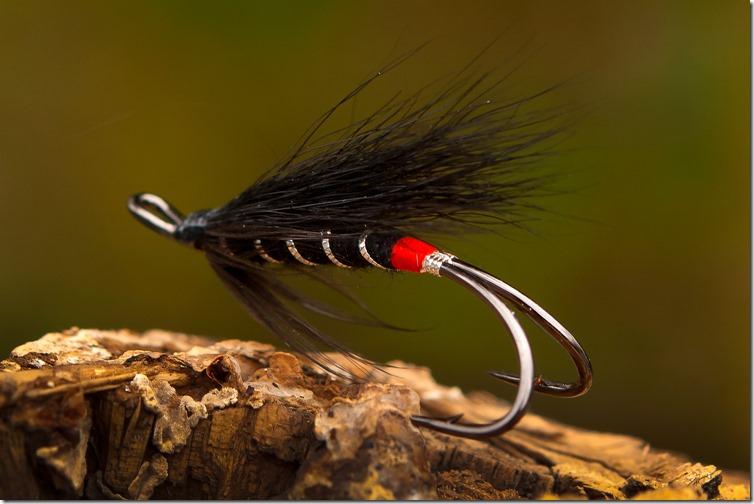 Black Bear Red Butt by John Rasmussen-02-2