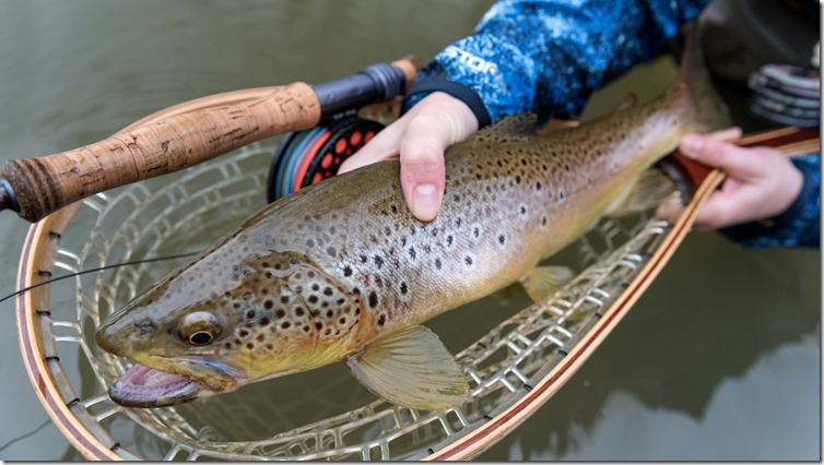 streamerfishing_browntrout