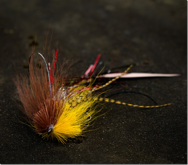 Brown & Yellow Bufurd by Anthony Sandrone-01