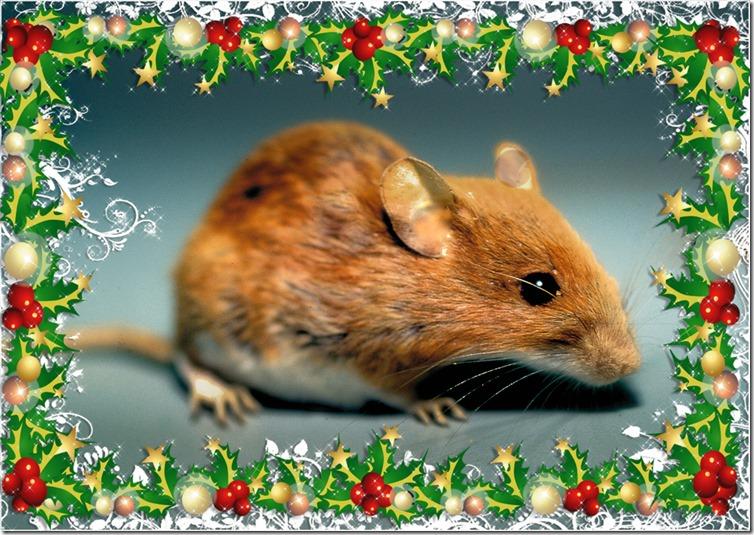 Jule-mus