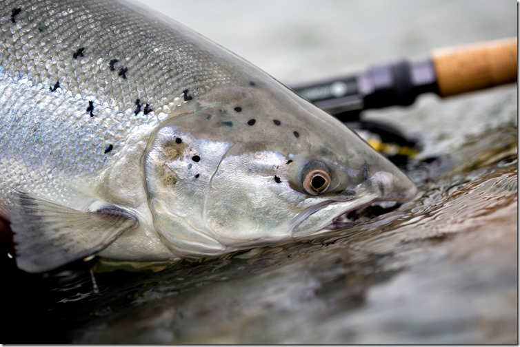 QZ4A2434 Photo Credit The Flyfishing Nation