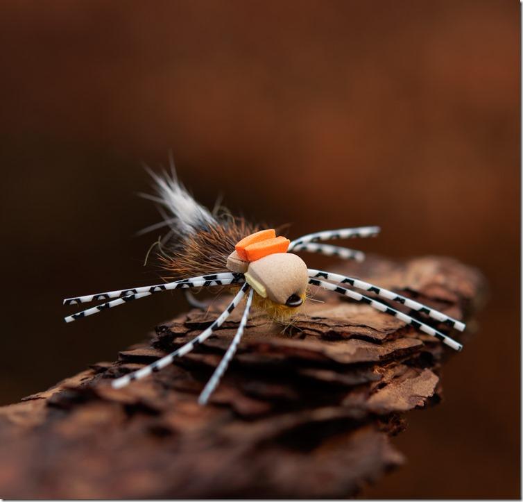 Foam Beetle by Brian Ratcliff-01