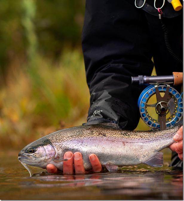 Abborra Gjölen Rainbow Trout 18-09-01c