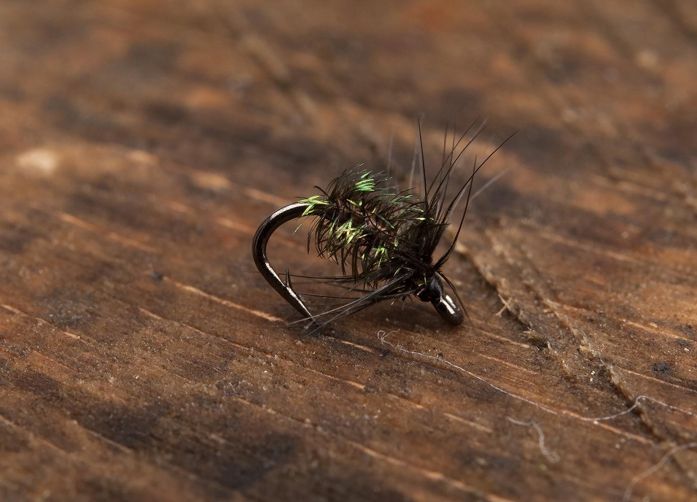 Black & Peacock Spider by Håkan Karsnäser-01