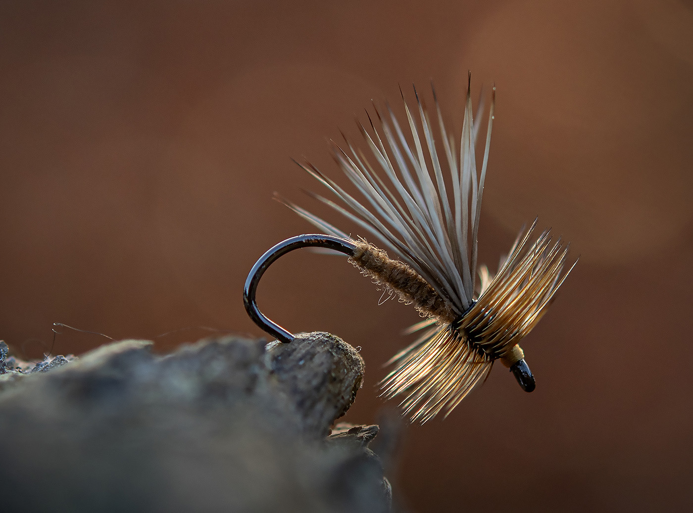 Brown Caddis by Luke Stacy-01