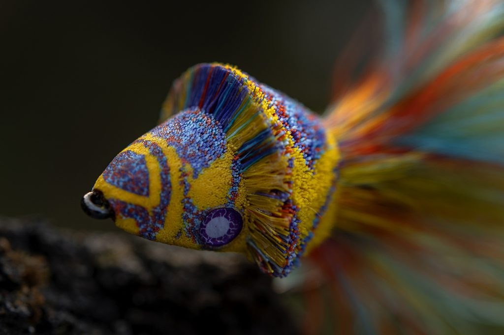 Yellow & Purple Diver by Andreas Andersson-08